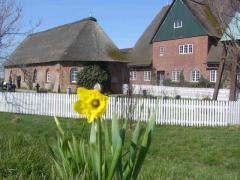 Osterglocke mit Kirche und Pastorat im Hintergrund